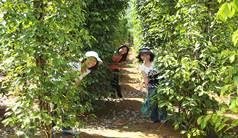 http://vietnamtourhcm.com/upload/vietnamtourhcm/images/Vuon%20Tieu.jpg